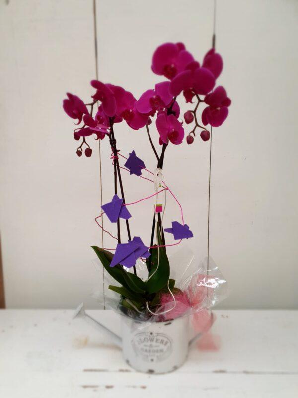 La Pérgola Floristería Almoradí Tienda En Linea Flores -19 orquídea