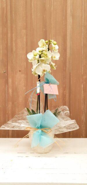 La Pérgola Floristería Almoradí Tienda En Linea Flores -19 orquídea blanco